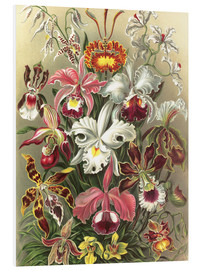 Foam board print  Orchids, artistic forms of nature, graphic 74 - Ernst Haeckel