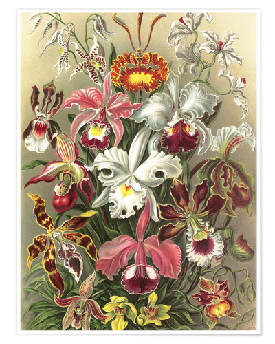 Premium poster Orchids, artistic forms of nature, graphic 74