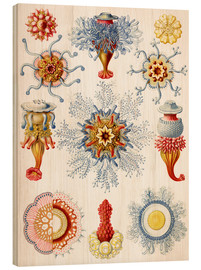 Wood print  Siphonophorae (Art forms of nature: graphic 17) - Ernst Haeckel