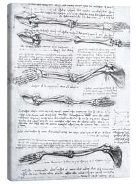 Canvas print  Bones of the arms - Leonardo da Vinci