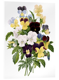 Acrylic print  Bouquet of Pansies - Pierre Joseph Redouté