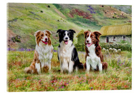 Acrylic print  Border Collies - Selina Morgan