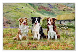 Premium poster Border Collies