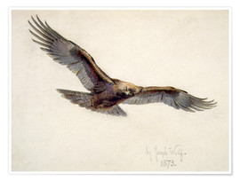 Premium poster  Eagle in flight, 1873 - Joseph Wolf
