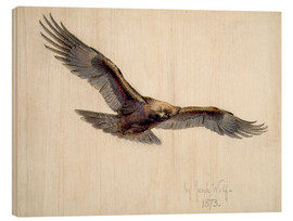 Wood  Eagle in flight, 1873 - Joseph Wolf
