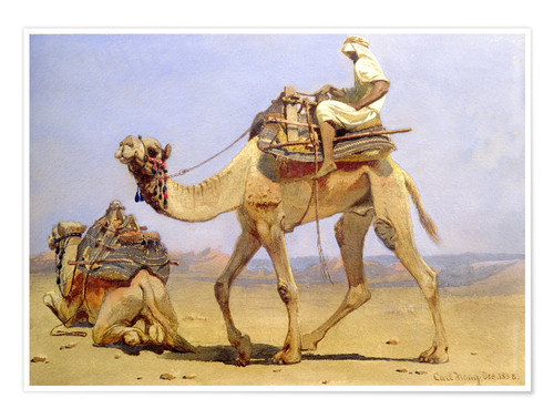 Premium poster Camel shortly before lying down, 1858