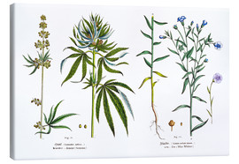 Canvas print  Cannabis and Flax - Matthias Trentsensky