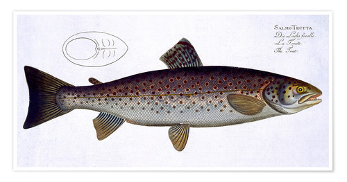 Premium poster Plate with a pike