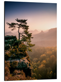 Aluminium print  Lonely Tree at Sunrise - Andreas Wonisch