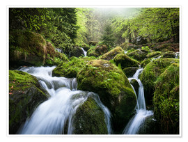 Premium poster Wild Creek in German Black Forest