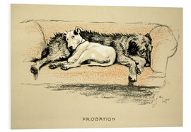 Foam board print  Probation - Cecil Charles Windsor Aldin