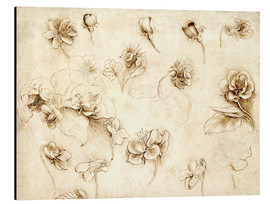 Aluminium print  Study of Flowers of Grass-like plants - Leonardo da Vinci