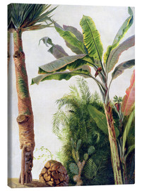Canvas  Banana Tree - Frederic Edwin Church