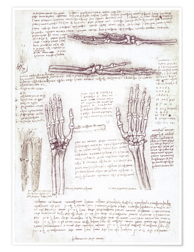 Premium poster Study of a hand