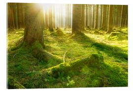 Acrylic print  Fairytale Forest - Oliver Henze