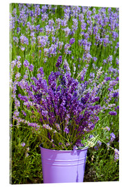 Acrylic print  Lavender in metal bucket - Thomas Klee