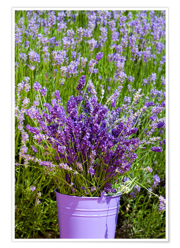 Premium poster Lavender in metal bucket