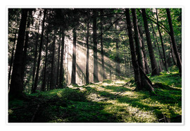 Poster Light rays in the forest