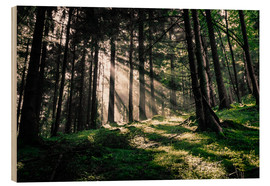 Oliver Henze - Light rays in the forest