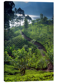 Canvas print  Tea plantation and lake, Sri Lanka - Paul Kennedy
