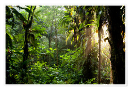 Premium poster  jungle light - Peter Schickert