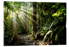 Acrylic print  Jungle light - Peter Schickert