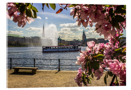 Acrylic print  Cherry on the Alster in Hamburg for Spring - Dennis Stracke