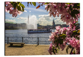 Aluminium print  Cherry on the Alster in Hamburg for Spring - Dennis Stracke