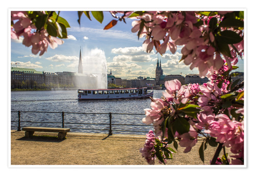Premium poster Cherry on the Alster in Hamburg for Spring