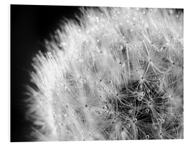Foam board print  Dandelion dew drops black and white - Julia Delgado