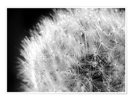 Premium poster  Dandelion dew drops black and white - Julia Delgado
