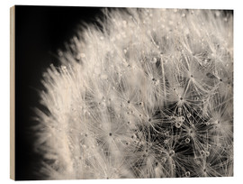 Wood print  Dandelion dew drops black and white - Julia Delgado