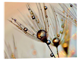 Acrylic print  Dandelion dewdrops in the sunlight - Julia Delgado