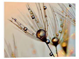 Forex  Dandelion dewdrops in the sunlight - Julia Delgado