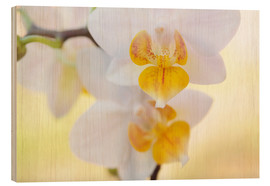 Wood  White orchids against soft yellow background - Julia Delgado