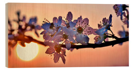 Wood print  Cherry blossoms against evening under the setting sun - Julia Delgado