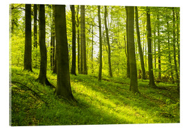 Acrylic print  Magical beech forest - Oliver Henze