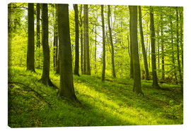 Canvas print  Magical beech forest - Oliver Henze