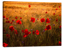 Canvas print  Poppies - Steffen Gierok