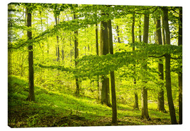 Canvas print  beech wood - Oliver Henze