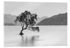 Acrylic glass  Lone Tree / black & white - Sebastian Warneke