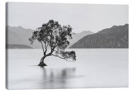 Canvas print  Lone Tree / black & white - Sebastian Warneke