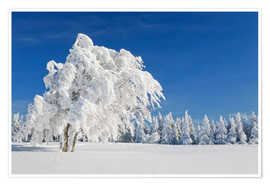 Premium poster Black Forest Winter Landscape