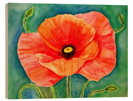 Wood print  Big poppy flower - siegfried2838