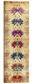Canvas print  Characterstics of Chakras - Sharma Satyakam
