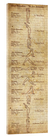 Acrylic glass  Surya Namaskara the sun salutation(vertical) yoga poster - Sharma Satyakam