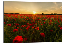 Alu-Dibond  Field of poppies - Oliver Henze