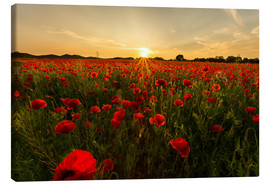 Canvas  Field of poppies - Oliver Henze