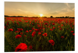 Foam board print  Field of poppies - Oliver Henze
