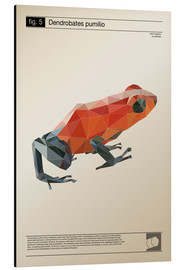 Alu-Dibond  fig5 Polygonfrosch Poster - Labelizer